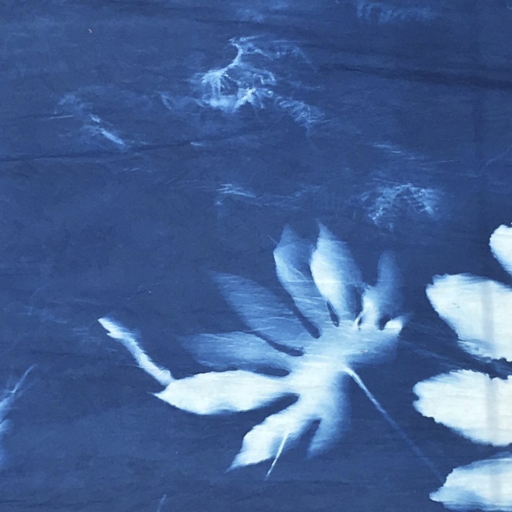 CHELSEA FRINGE CYANOTYPE_EDIT005.JPG