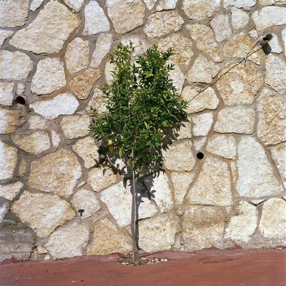 Untitled 001 25 x 25 cm c type print, unglazed. From the installation Garden State © Corinne Silva