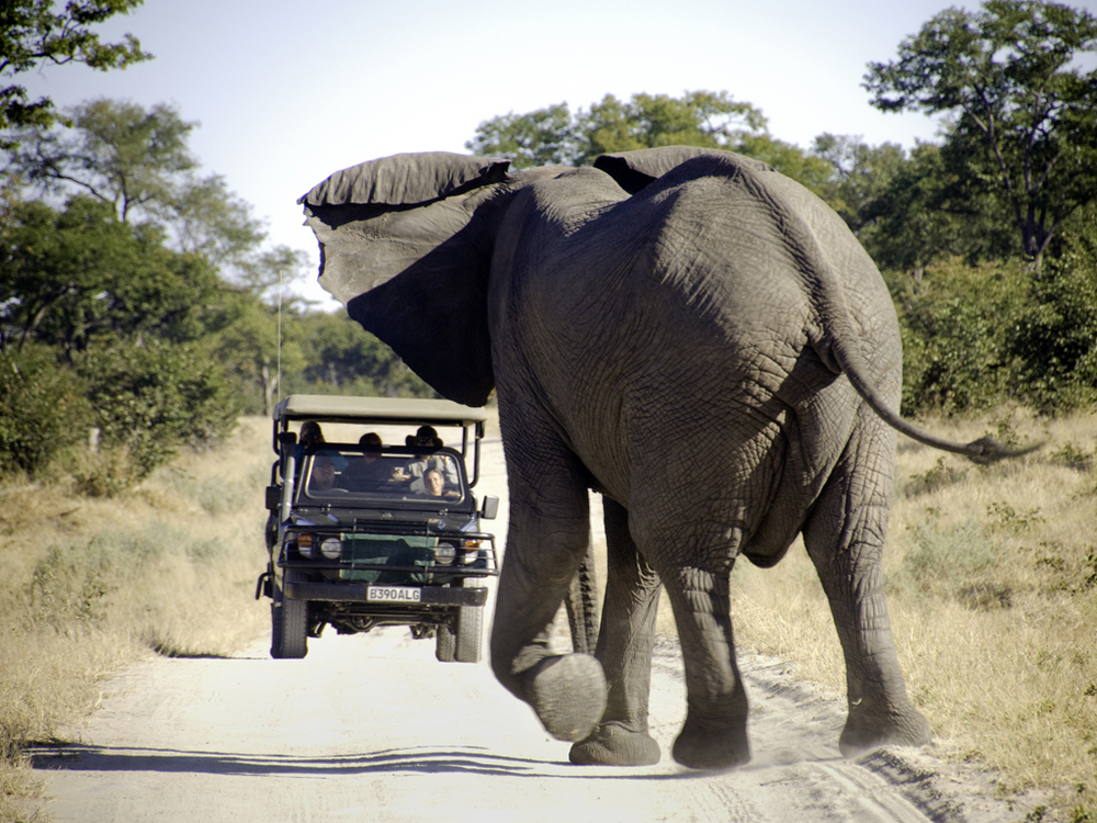 botswana-elephant-safari-eco-tours-international-all-rights-reserved
