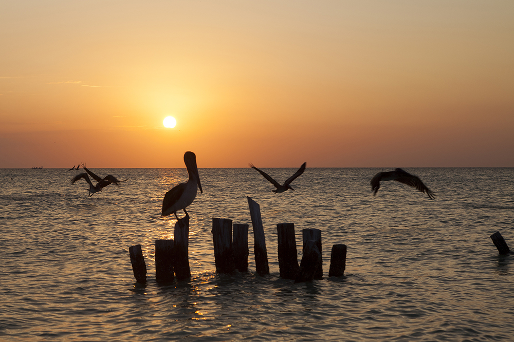 pelicanss.jpg