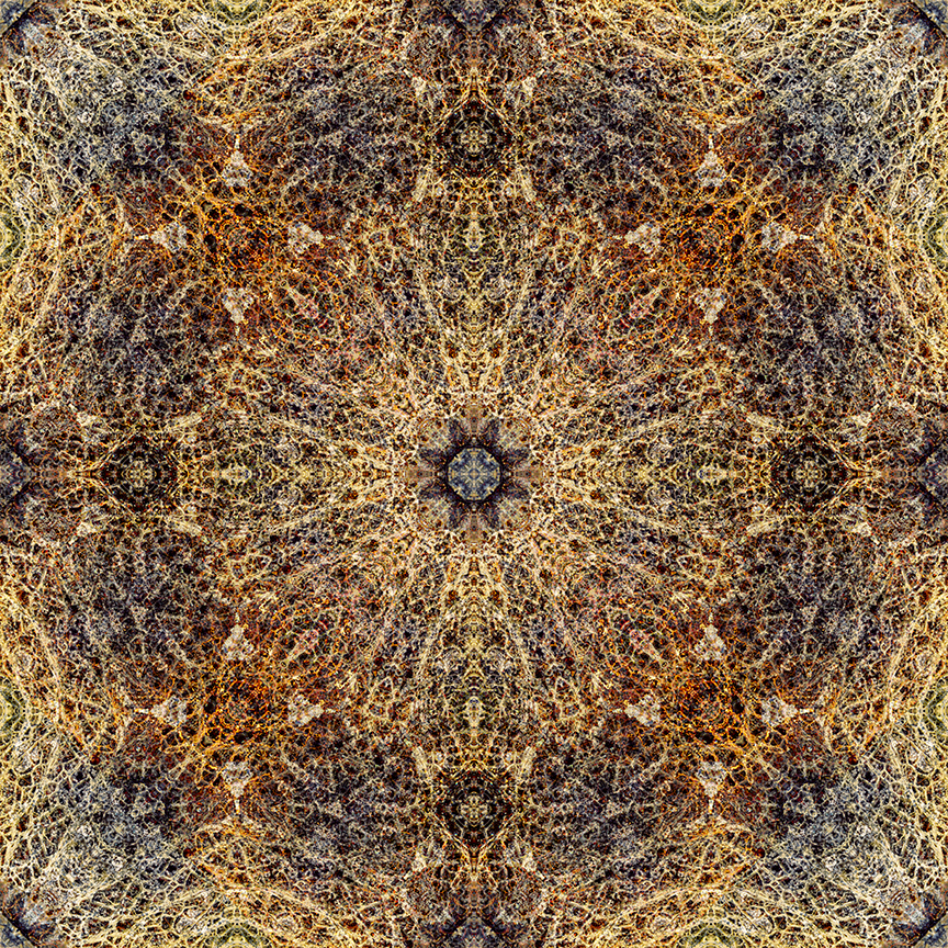 Mandala mage from a dead cactus