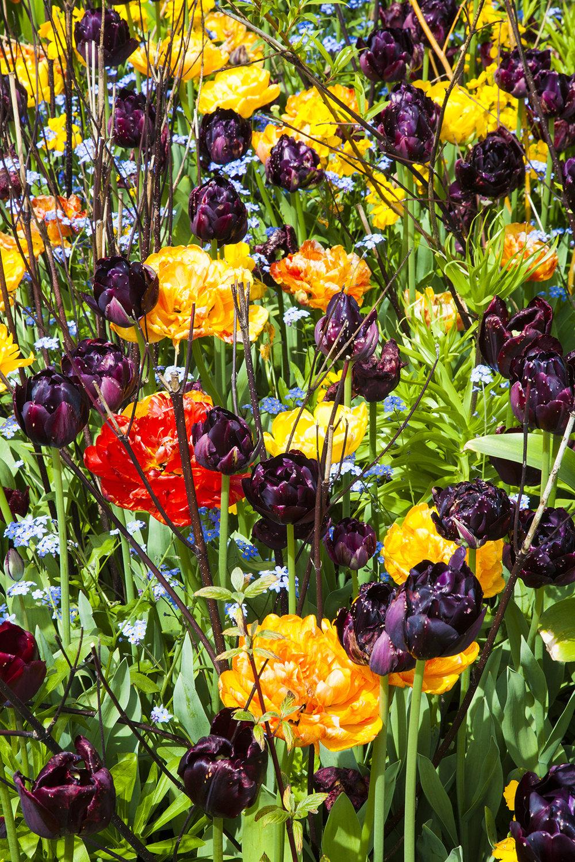 flowers web.jpg