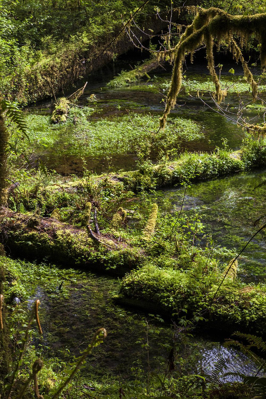 mossy creek web.jpg