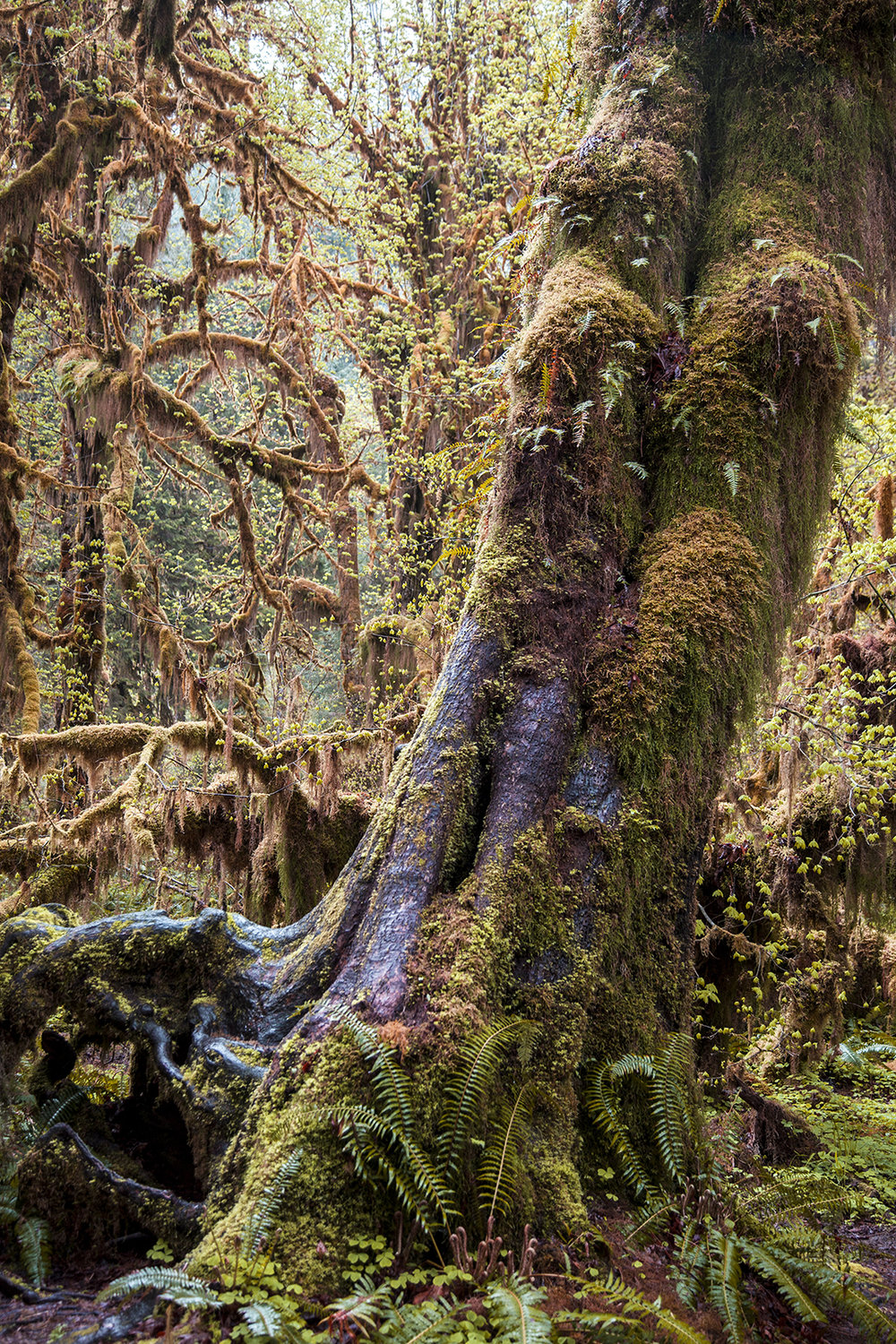 tree covered in moss web.jpg