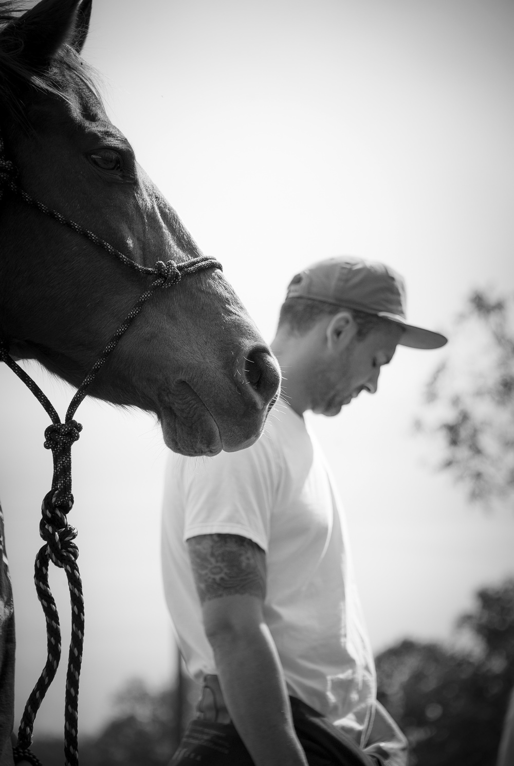 equine-therapy-rehab.jpg
