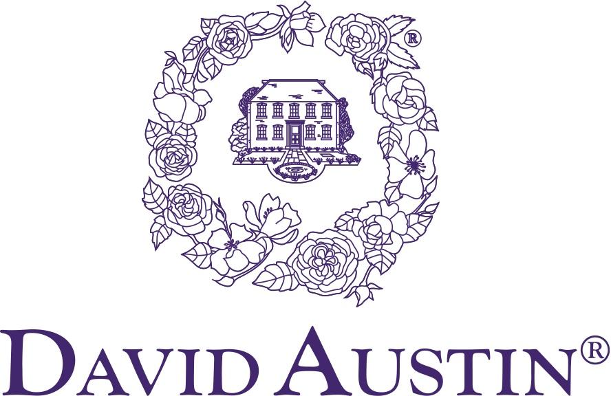 David Austin Roses.jpg