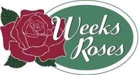 Weeks roses.jpg