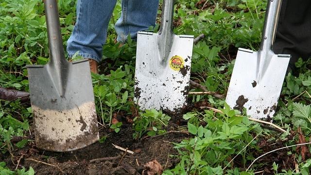 november-gardening-tips.jpg