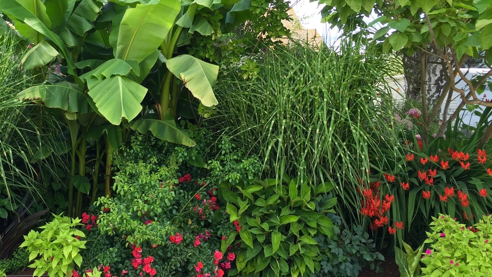 Creating a perennial tropical border sunnyside nursery mightylinksfo