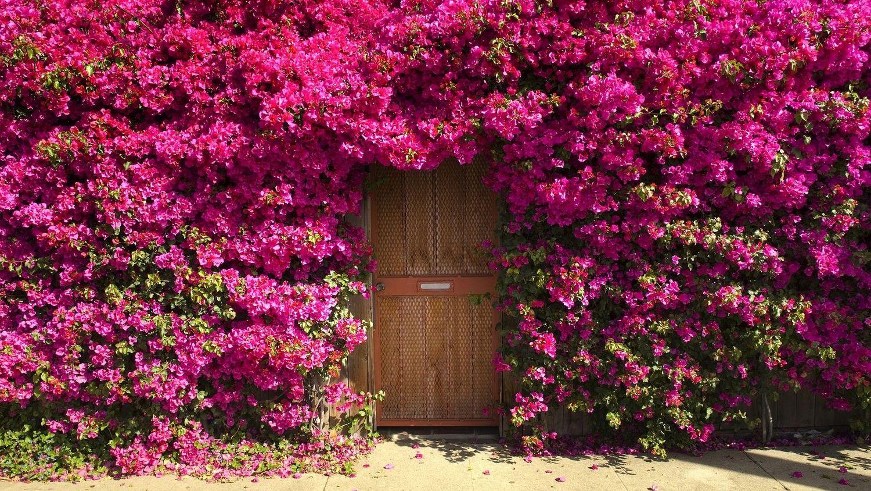 Roses Sunnyside Nursery