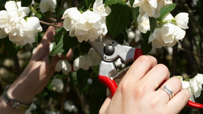 pruning.jpg