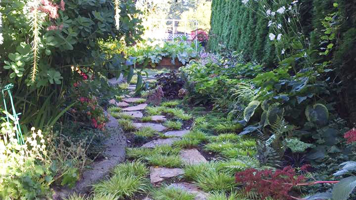 Steve's shade garden.jpg