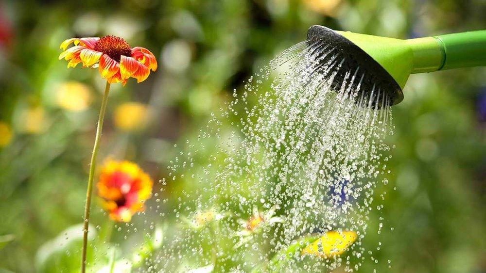 fall watering.jpg