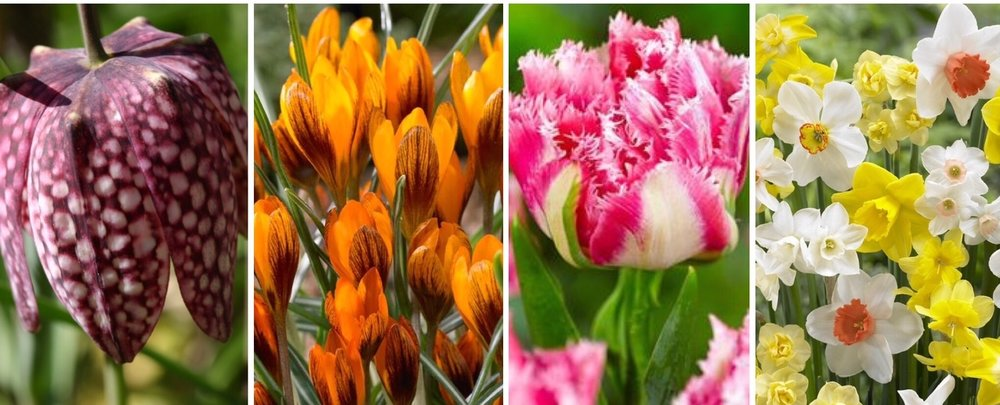 spring bulb collage.jpg