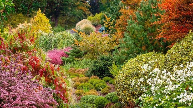fall shrub garden.jpg