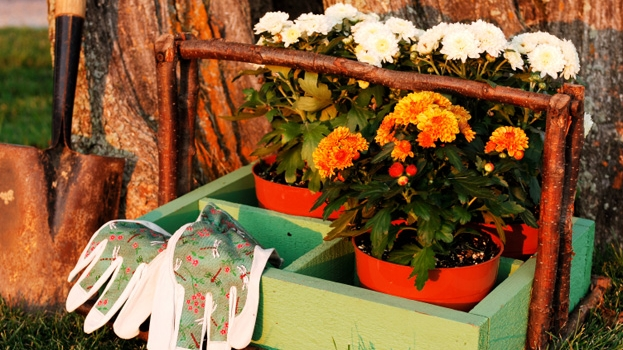 Fall gardening setup.jpg