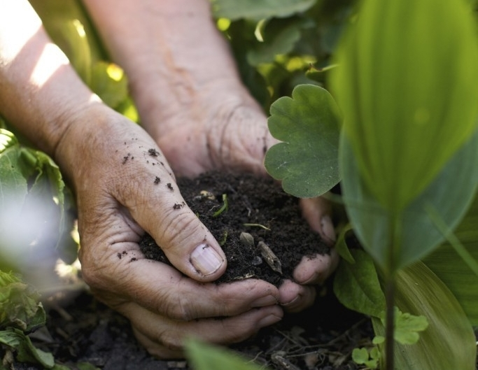 vegetable-garden-soil.jpg