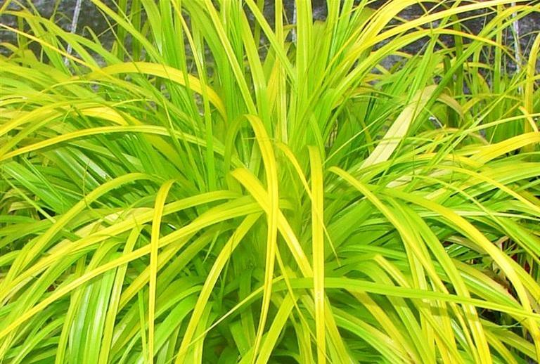 everillo grass.jpg