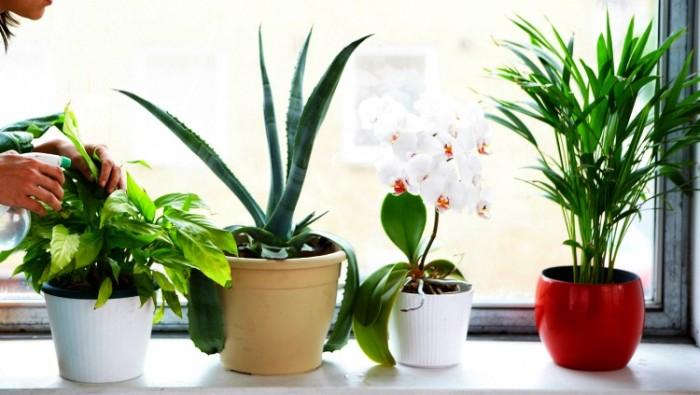 houseplants-e1471574259264.jpg