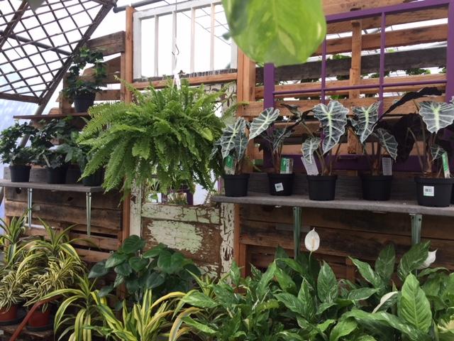 houseplants-Sunnyside2.jpg