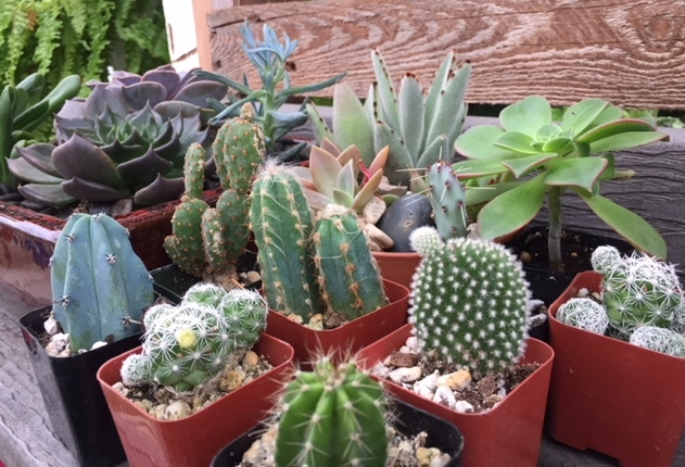succulents and cacti.jpg