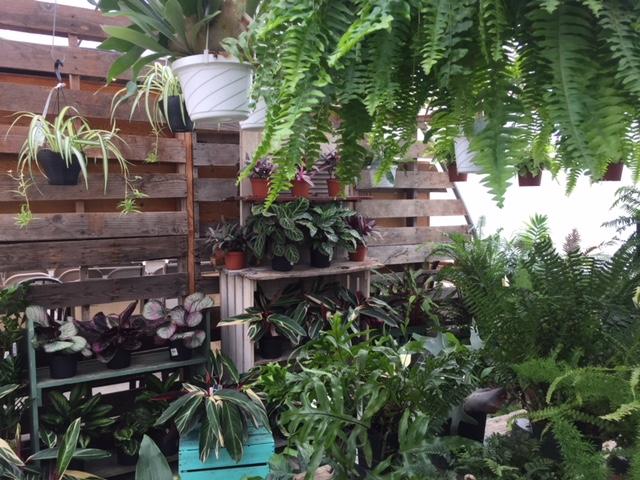 houseplants-Sunnyside.jpg
