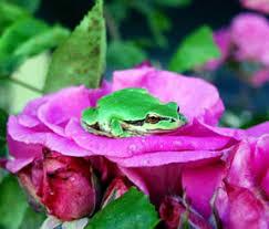 Tree frog6.jpg