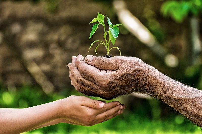 Life-Hands-Gardening.jpg