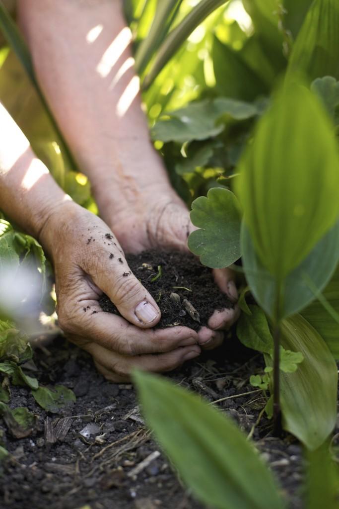 vegetable-garden-soil.jpg