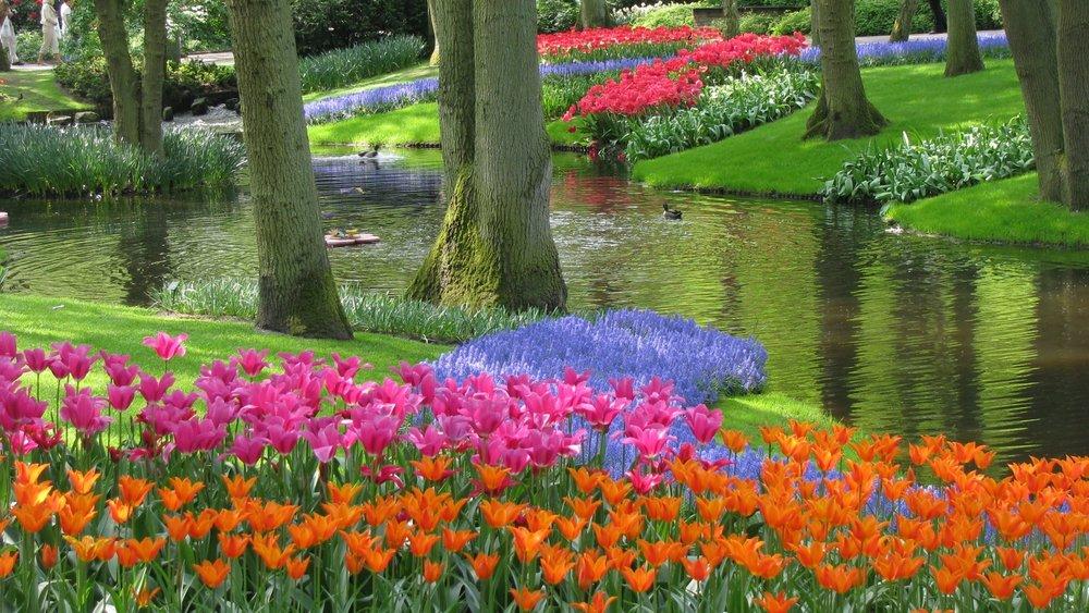 garden with tulips.jpg
