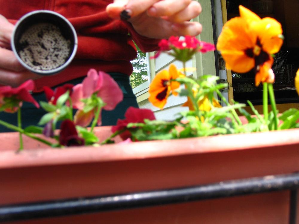 coffee grounds in you garden.jpg