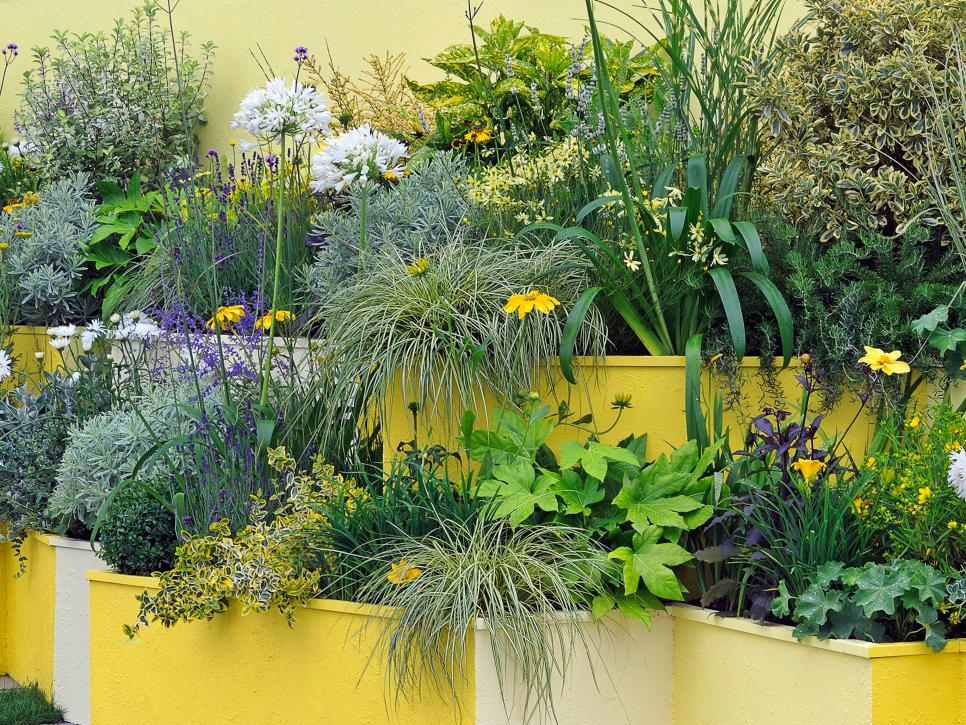 yellow compact planters.jpg