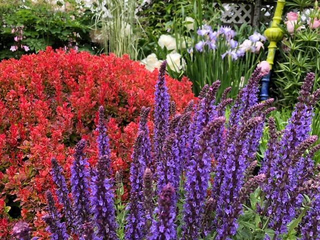 Perennials in Steve's garden.jpg