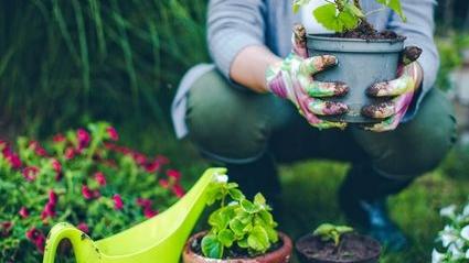 july gardening chores.jpg