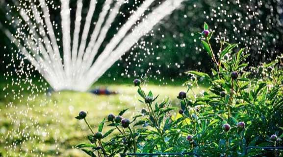 Summer watering.jpg