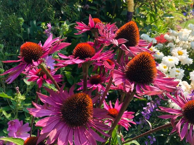 Summer bloomers in Steve's yard.jpg