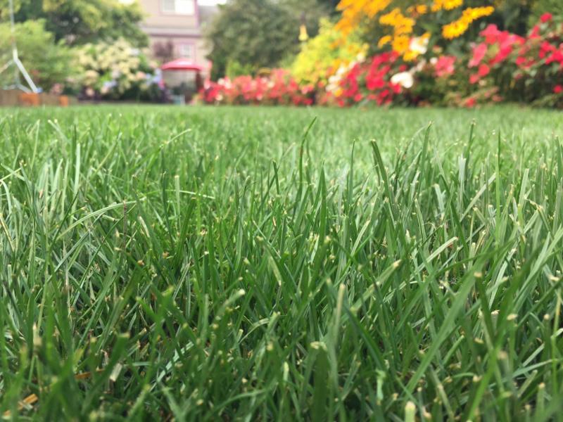 steve_s lawn.jpg