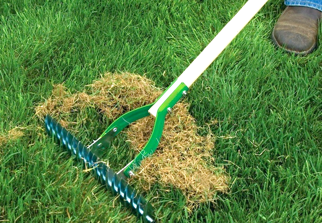 dethatching your lawn.jpg
