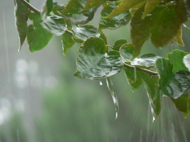 rain on leaves.jpg