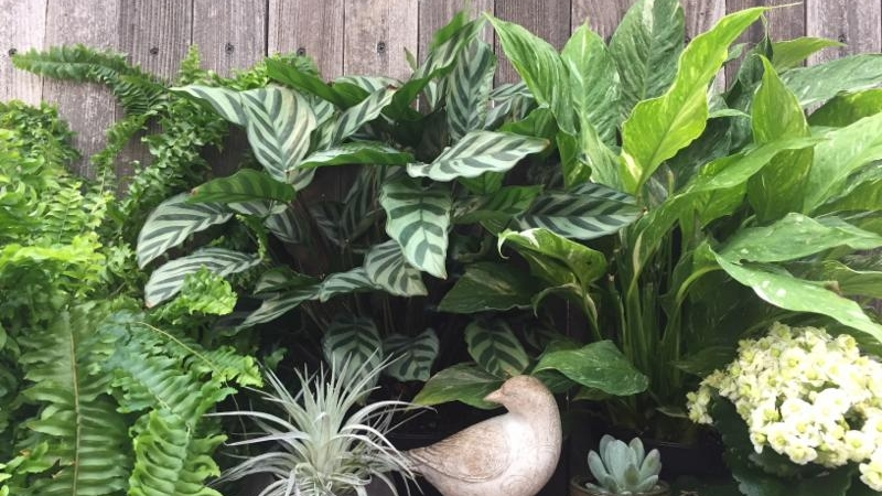 My Favorite Houseplants — Sunnyside Nursery on house plant room, house plant watering system, house plant houseplants, house plant care information,