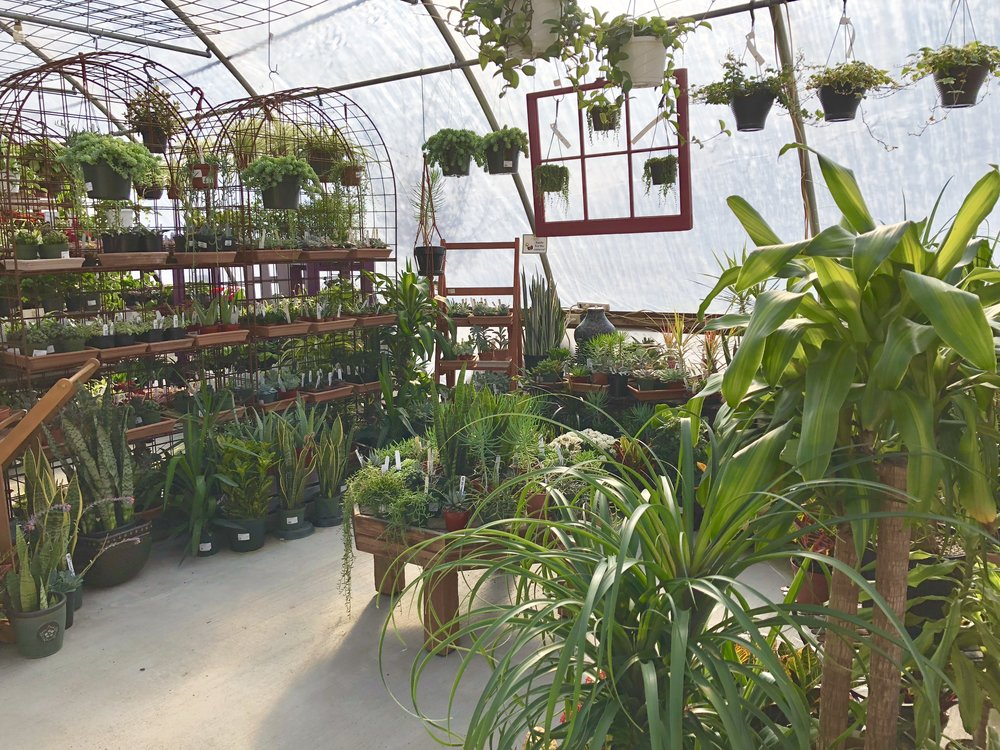high light houseplant section.JPG