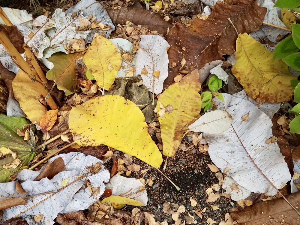 Leaves kalidescope.jpg