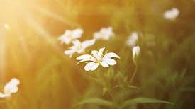 sunshine+on+flower.jpg