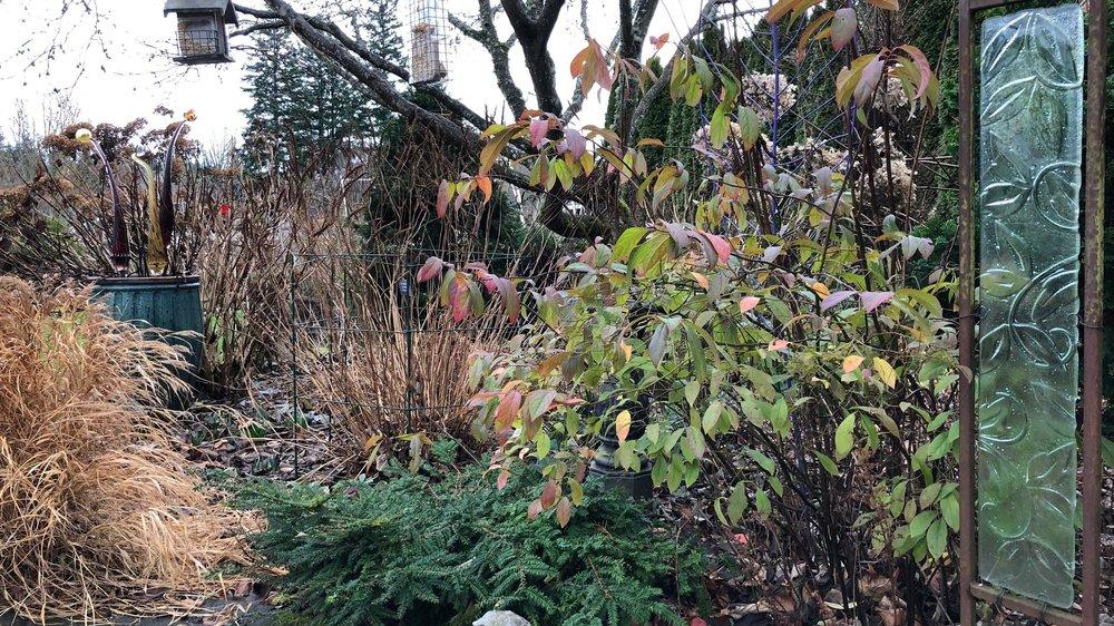 steve%27s+garden+in+winter.jpg