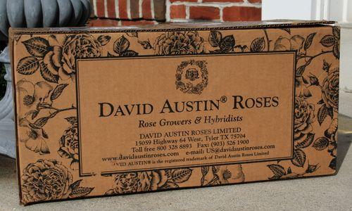 box of roses.jpg