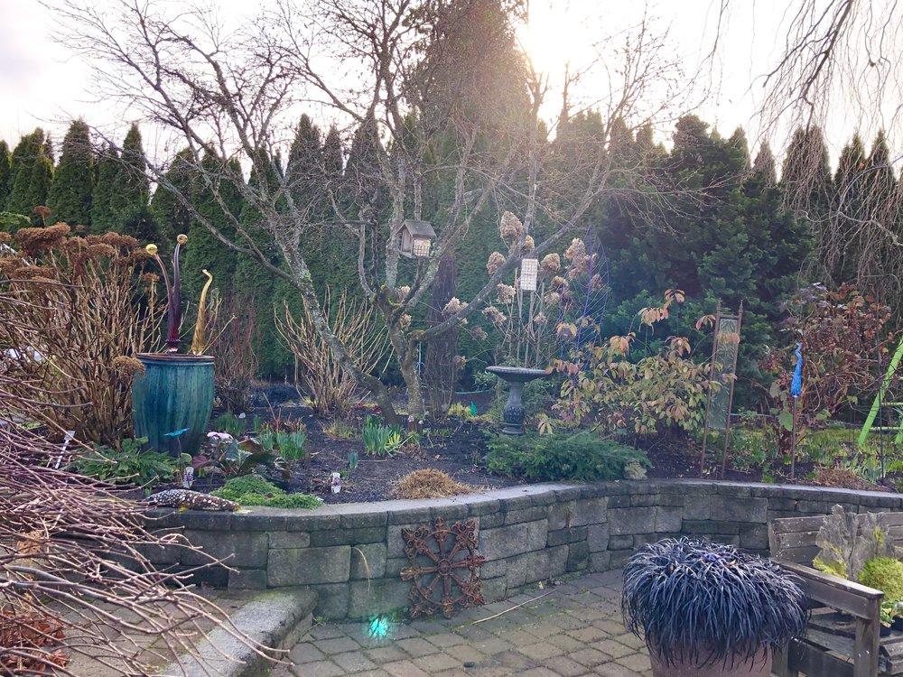 Steve's garden in winter.JPG