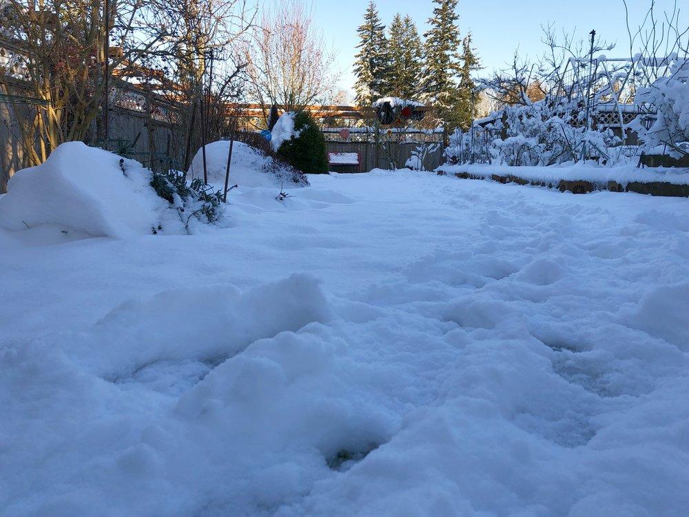 Steve's lawn with snow.JPG