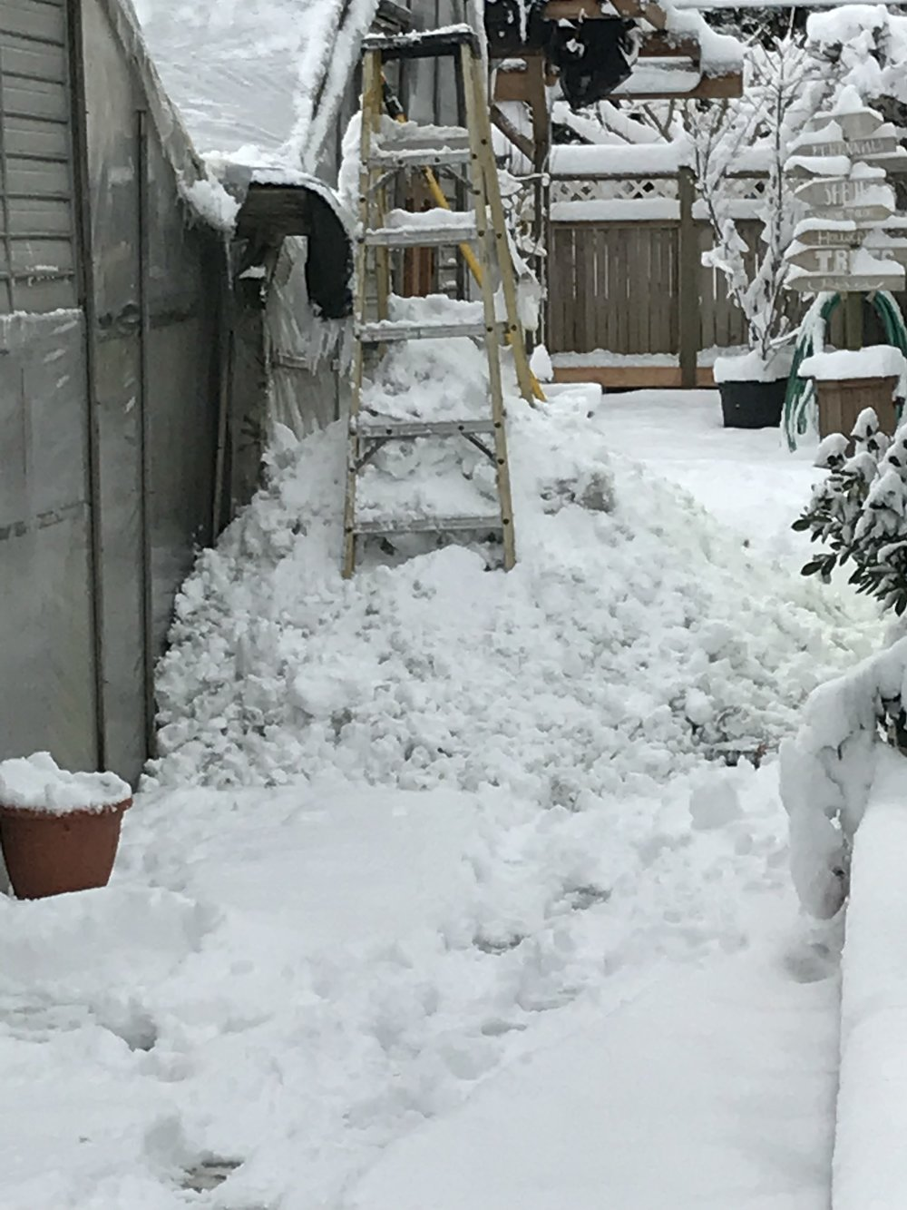 Clearing snow from greenhouse.jpeg