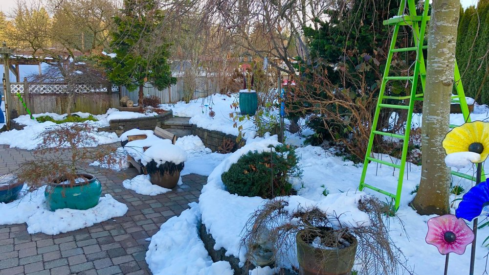 Steve%27s+backyard+with+sno.jpg