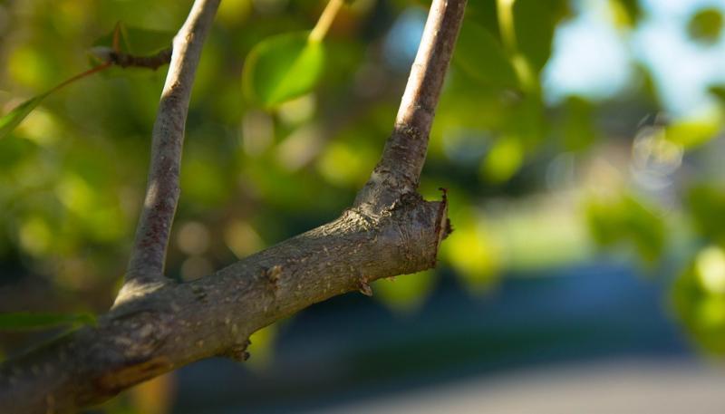 pruning-499257_960_720.jpg